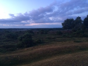Evening run in the New Forest, UK.